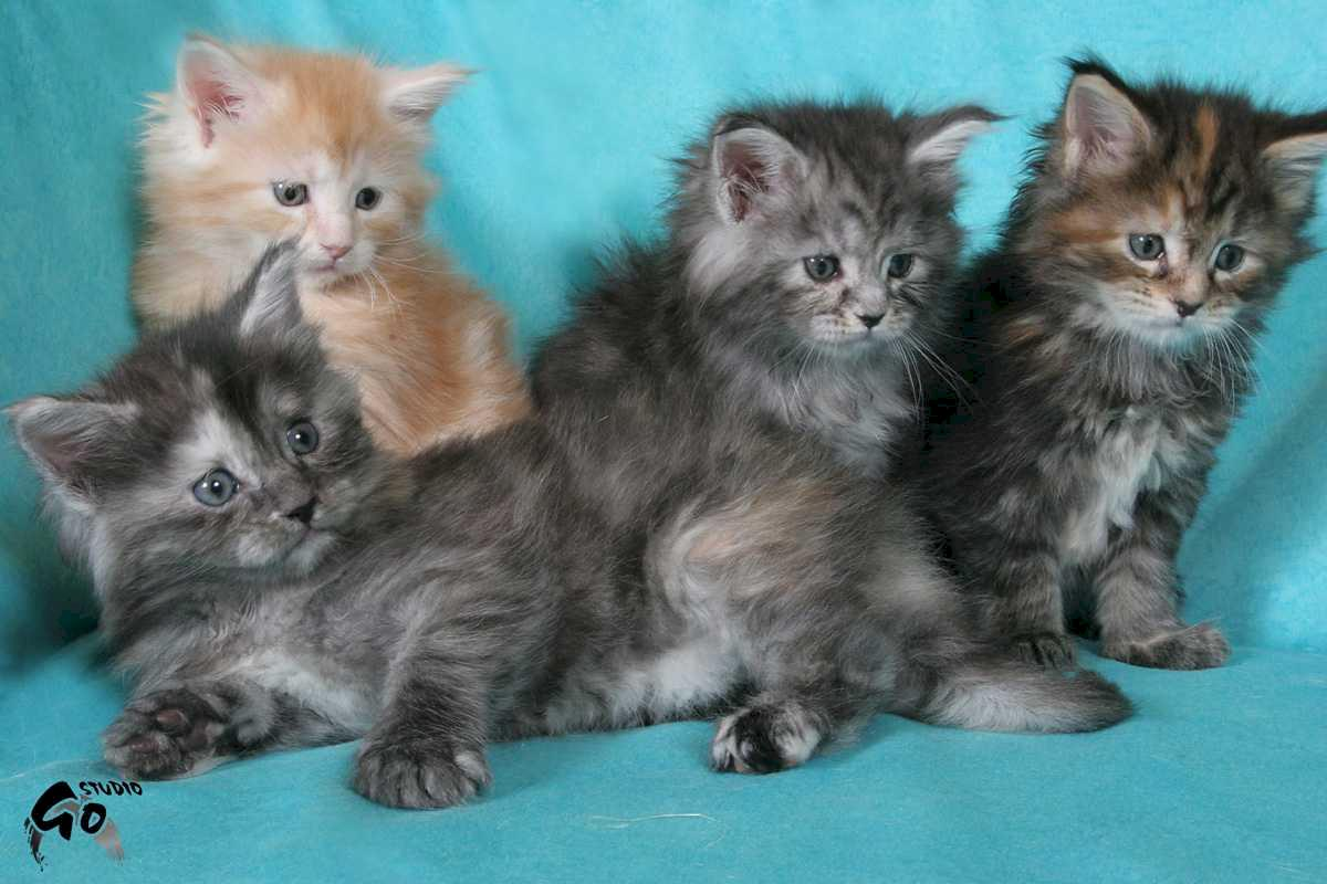 Gang of Kittens