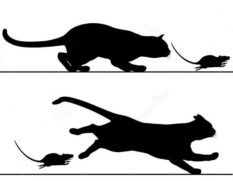 Cat chasing mouse vs Mouse chasing cat
